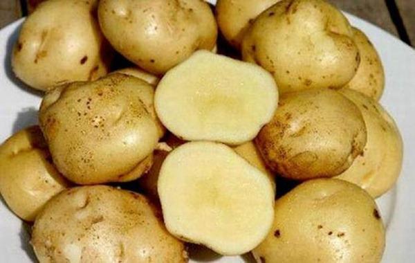 Картофель La Bonnotte