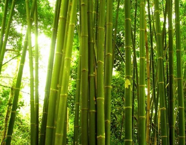 Музей бамбука (Фу Ан, Вьетнам)