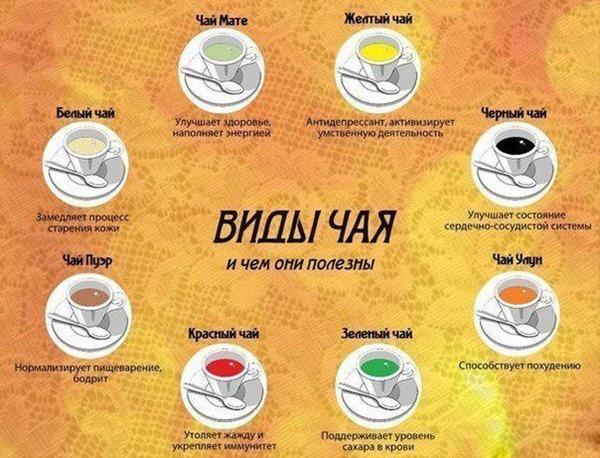 классификация видов чая