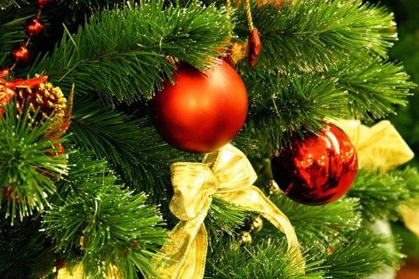 Новогодняя елка может стать причиной аллергии