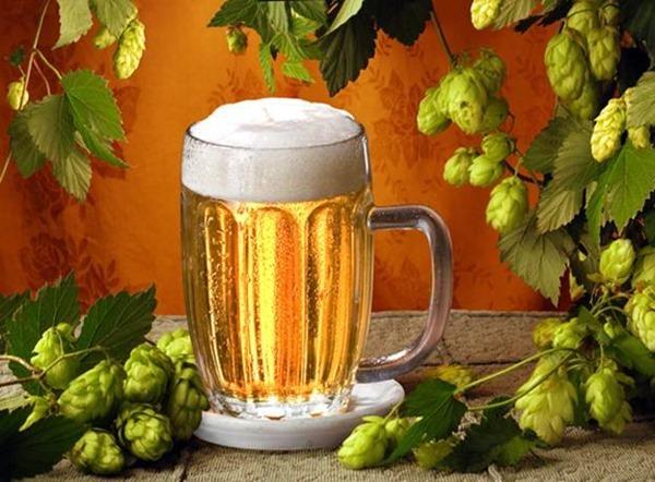 Пиво может помочь при разработке лекарств от диабета и рака
