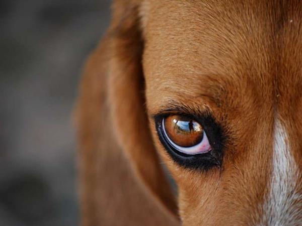 Собаки помогут предотвратить у человека диабет