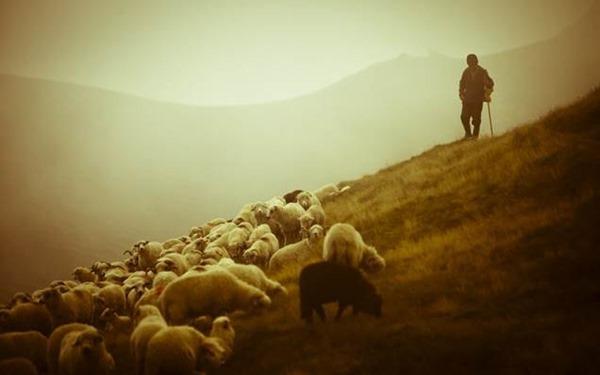 Аврамий Овчар и Анастасия Овечница – 11 ноября