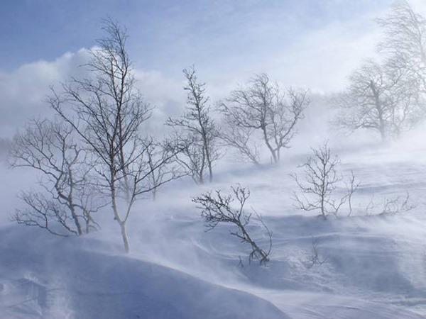 Никонов день – 24 декабря