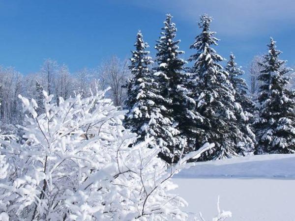 Федосеев день – 24 января