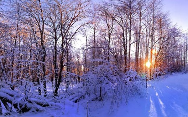 Макарьев день, Макар-весноуказчик – 1 февраля