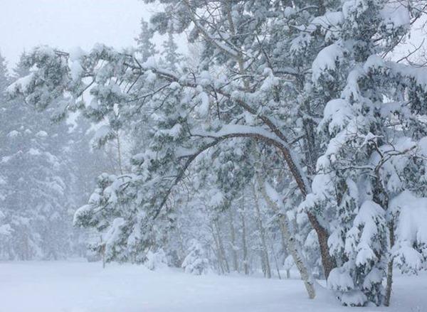 Ефимов день – 2 февраля