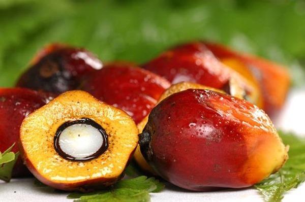 Из чего получают пальмовое масло